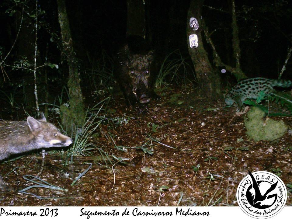 As iniciativas de seguimento achegan unha información fundamental sobre a nosa fauna