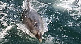 Presentan en Irlanda unha cronoloxía dos arroaces solitarios galegos