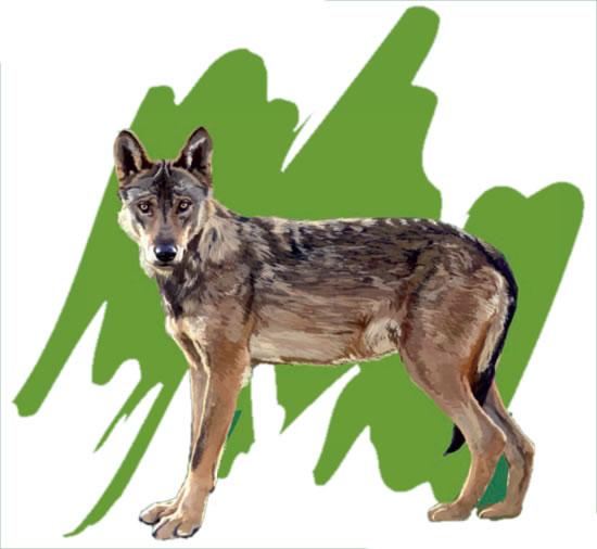A segunda sesión inclúe un roteiro polos foxos do lobo de Bande (Ourense)