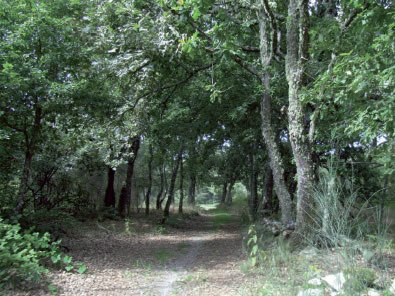 O Ministerio de Medio Ambiente inaugura 4 Camiños Naturais en territorio galego