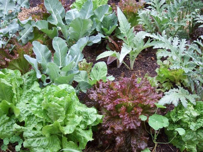 Preséntase en Lalín <i>Caldo de cultivo</i> un proxecto que integra arte e produción de alimentos ecolóxicos