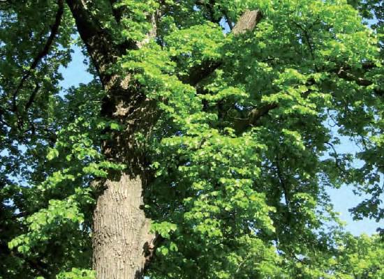 A obra <i>A árbore na cidade</i> denuncia o abandono dos espazos arborados nas nosas urbes