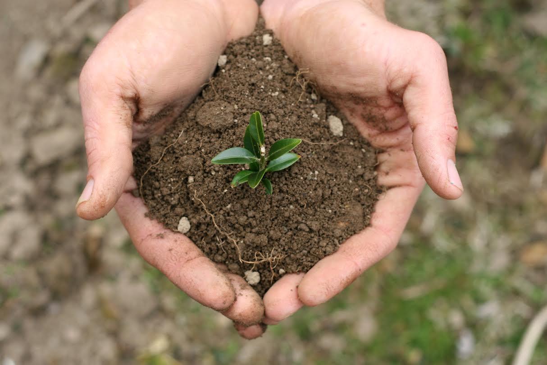 Clima, rocha e topografía condicionan a produtividade dos solos