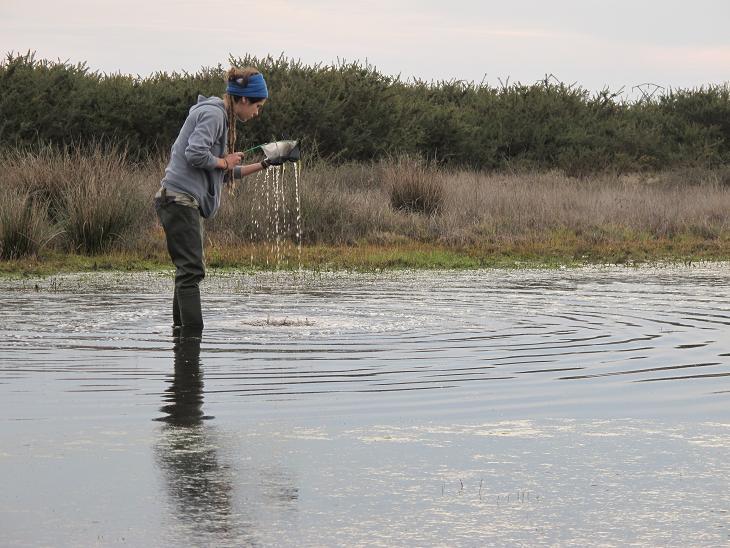 Un proxecto de voluntariado ambiental de ADEGA quere pór en valor estes pequenos ecosistemas